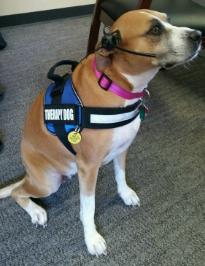 Miranda Therapy Dog